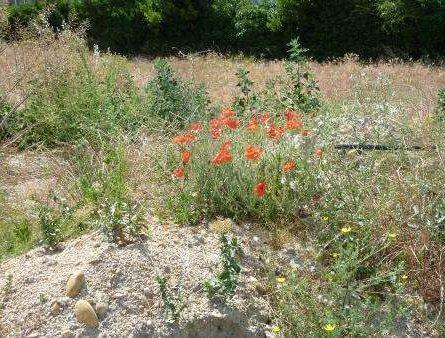 Terrain constructible à ARLES - constrcuteur de maison - Villas la Provençale