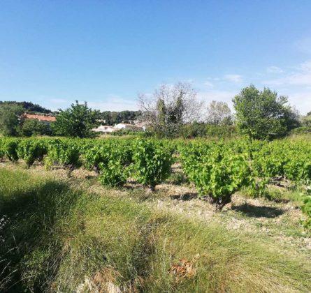 Terrain à batir Rasteau - constrcuteur de maison - Villas la Provençale